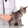 Ветеринарные клиники в Сосьве
